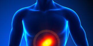 doktersehat-organ-dalam-ginjal