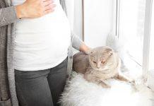 doktersehat-hamil-pelihara-kucing