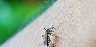 malaria-adalah-doktersehat