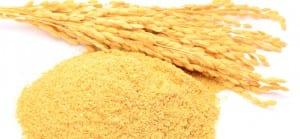 doktersehat-beras-padi-gandum