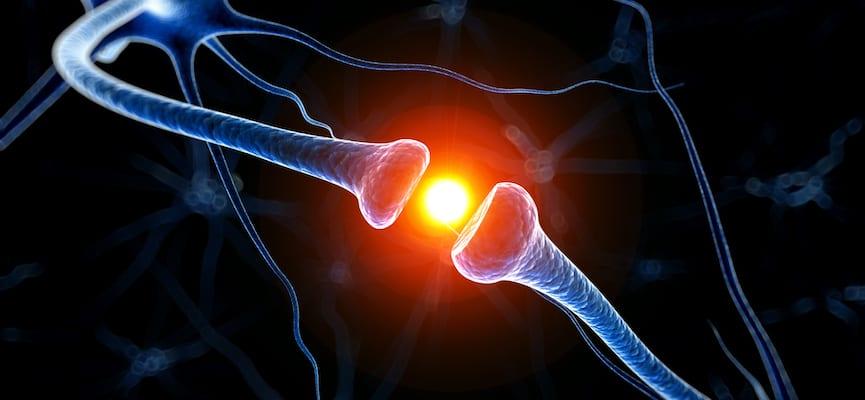 doktersehat-neuron