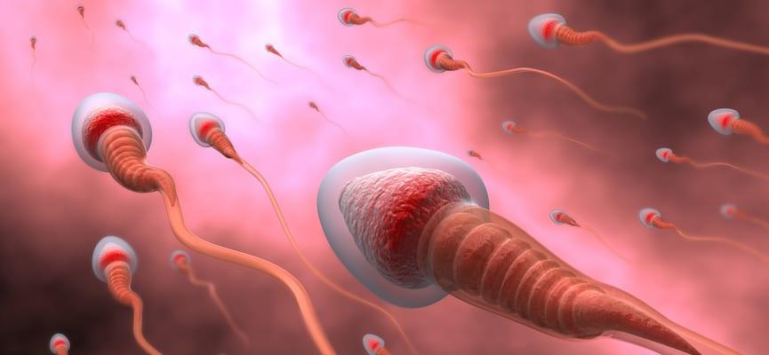 doktersehat-sperma-taoge