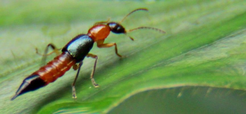Banyak Dari Kita yang Menyepelekan Gigitan Serangga