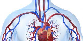 doktersehat-Aneurisma-jantung-aorta-1024