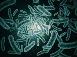 bakteri-penyakit-leptospirosis-doktersehat