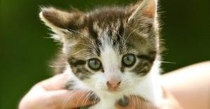 doktersehat-peliharaan-kucing