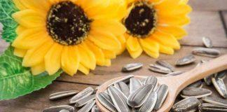 manfaat-kuaci-bunga-matahari-doktersehat
