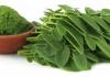 Manfaat daun kelor bagi kesehatan tubuh - doktersehat