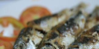 Doktersehat - Ikan