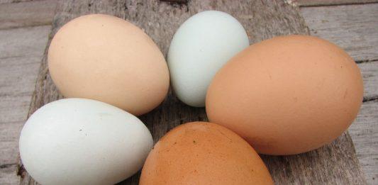 doktersehat-gizi-berbagai-telur