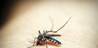 doktersehat-mengatasi-gigitan-serangga