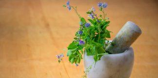 doktersehat-tanaman-herbal-untuk-perawatan-kulit