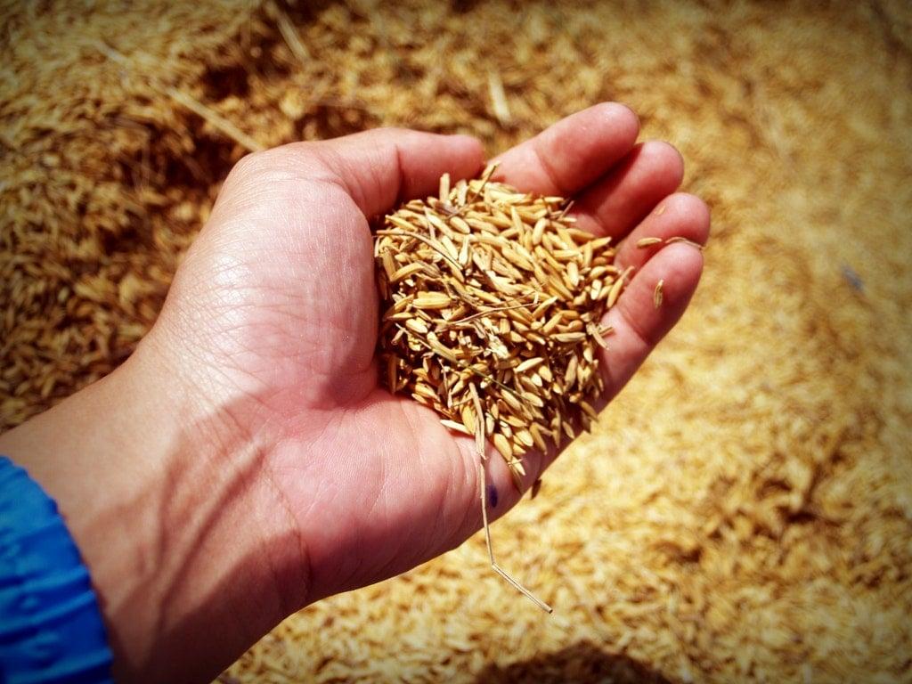Khasiat Brown Rice untuk Kesehatan Kulit