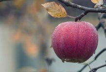 cara-menggunakan-cuka-apel-doktersehat-1