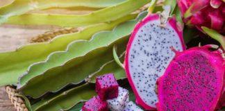 manfaat-buah-naga-doktersehat