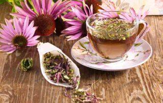 10 Manfaat Bunga Echinacea untuk Kesehatan, Bisa Cegah Kanker Payudara!