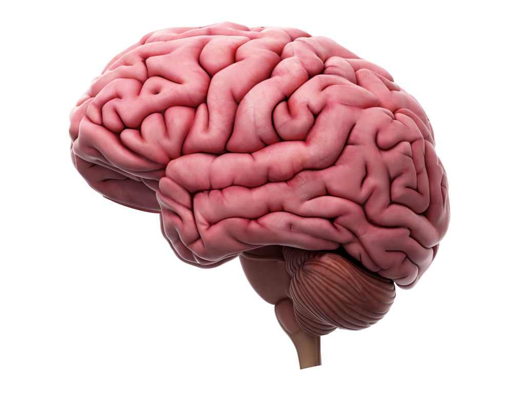 fungsi-otak-doktersehat