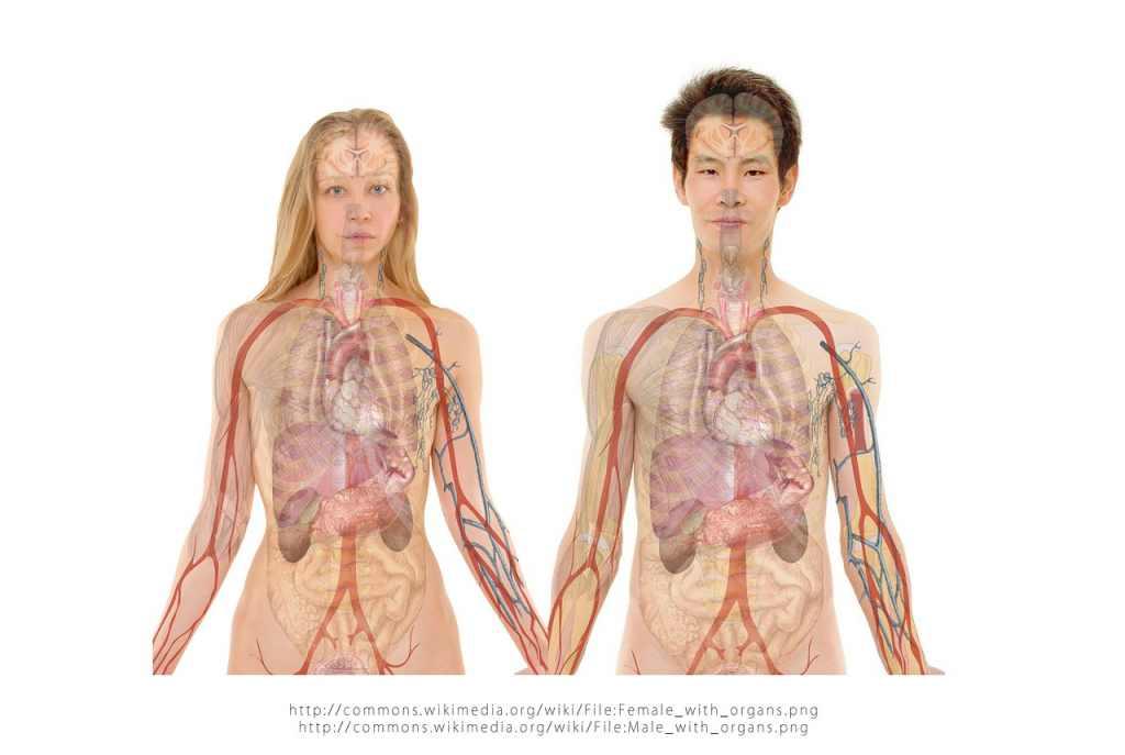 Anatomi Tubuh Struktur Tubuh Dan Sistem Organ