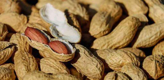 gambar-kacang-tanah-doktersehat