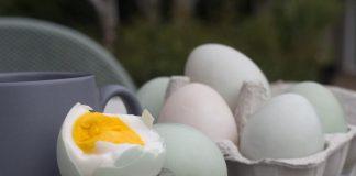 gambar-telur-asin-doktersehat