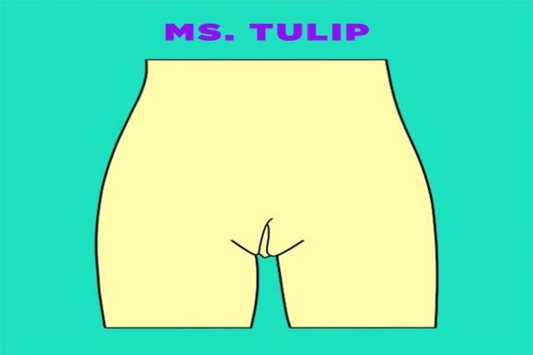 bentuk-miss-v-tulip-doktersehat