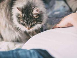 alergi-bulu-kucing-doktersehat