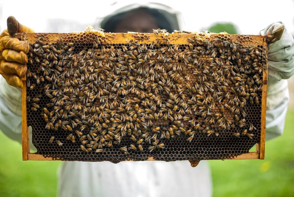 10 Manfaat Madu Mentah (Raw Honey) bagi Tubuh
