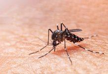 malaria-doktersehat
