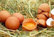 diet-telur-doktersehat