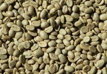 green-coffee-untuk-diet-doktersehat