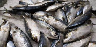 ikan-mengandung-omega-3-doktersehat