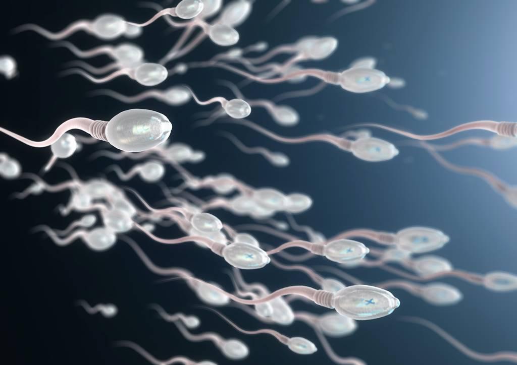 produksi-sperma-doktersehat