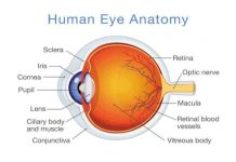 anatomi mata-doktersehat