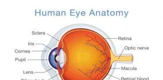anatomi-mata-doktersehat
