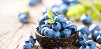 manfaat-buah-bluberry-doktersehat