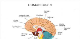 otak-doktersehat