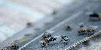 cara-mengusir-lalat-doktersehat