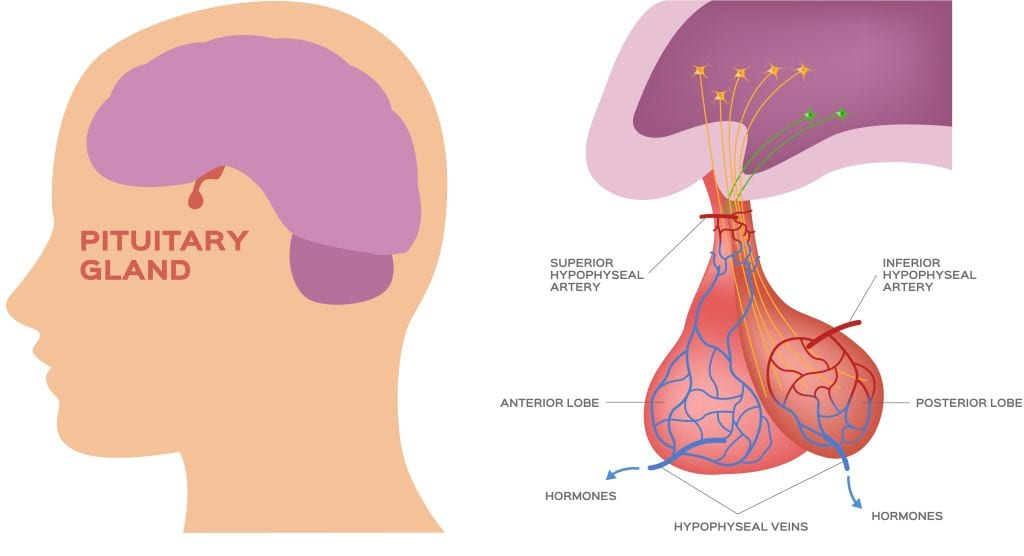 Prolaktinoma: Gejala, Penyebab, Diagnosis, dan Pengobatan