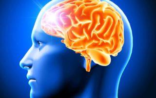 Hippocampus, Bagian Otak yang Berperan Penting untuk Mengingat