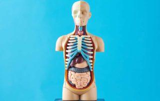 Mengenal Berbagai Organ Ekskresi dan Cara Menjaga Kesehatannya